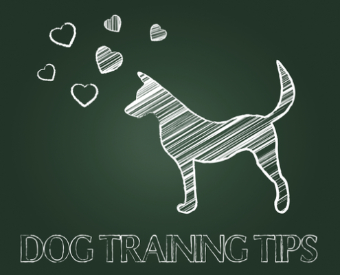 Training Tip Top Training Mistakes