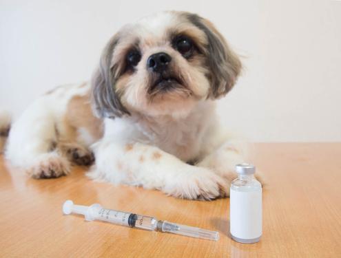 Diabetic Comas in Dogs