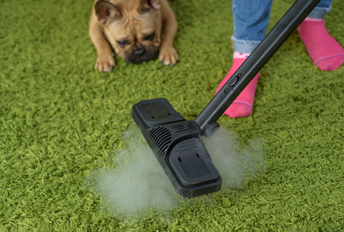 Getting Rid of Urine Smell from Carpets