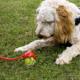 Interactive Dog Toys