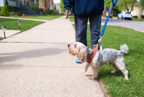 Stop Your Dog from Barking at Strangers